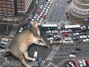 デカイ猫が街中で寝ててワロタwww