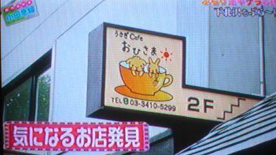 usagi-cafe (5)