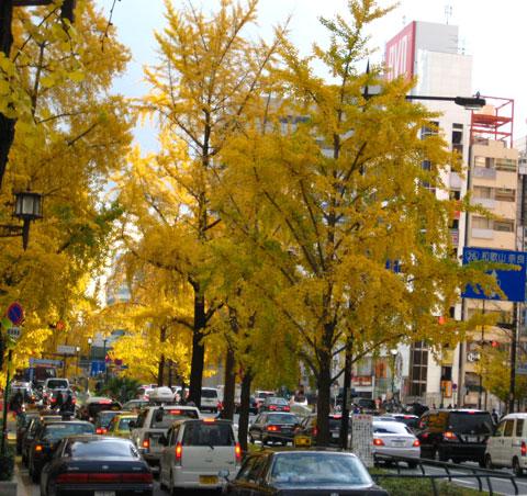 大阪の銀杏並木