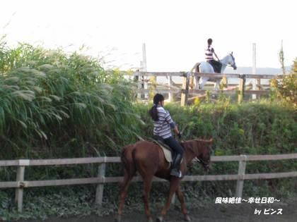 馬のいる光景