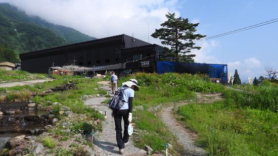 白馬五竜 高山植物園