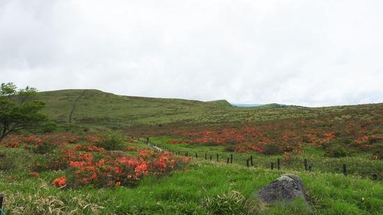霧ケ峰高原 レンゲツツジ満開の車山〜七島八島へ