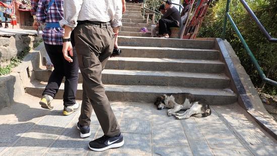 ネパールの動物たちは自由気まま!そして穏やか。
