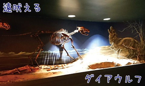 ダイアウルフの全身骨格標本