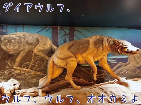 ダイアウルフの復元標本