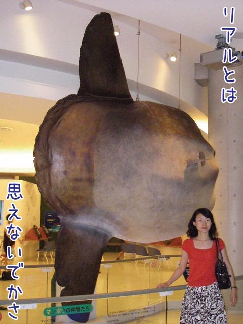 世界最大級のマンボウのはく製
