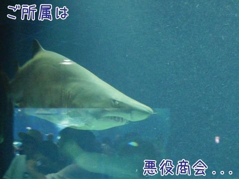 水槽を泳ぐ怖そうなサメ