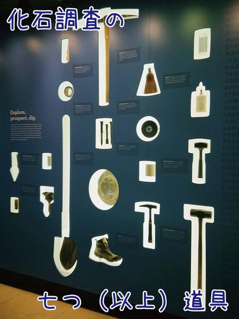 化石調査道具の展示