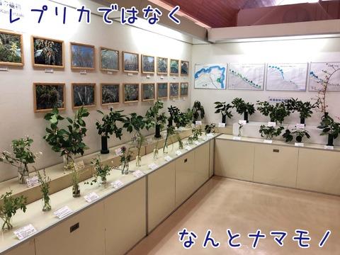 観音崎の植物が生で展示されている様子