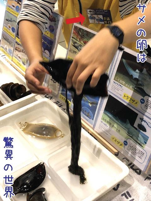 サメの卵について手話で説明するガイド