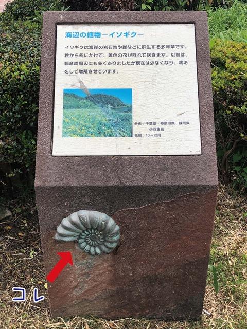 観音崎自然公園の海岸の植物を説明した看板