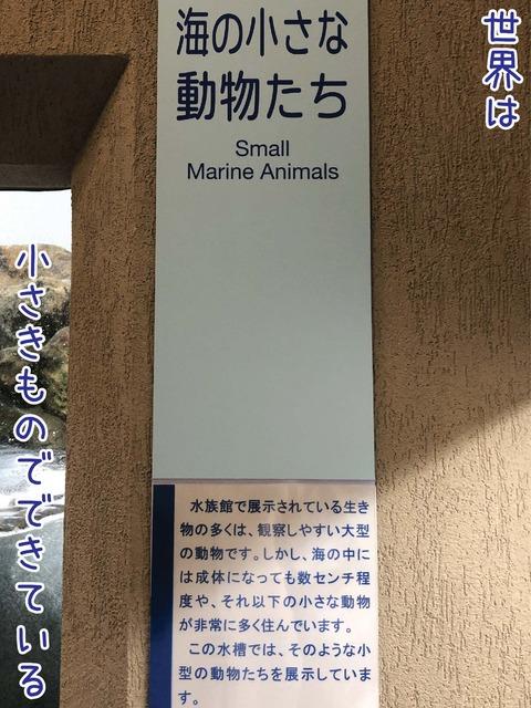 海の小さな動物たちというコーナーの看板