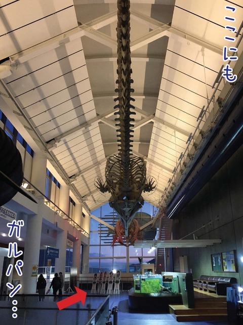 クジラの骨格標本と夕焼けのきれいな閉館前の館内