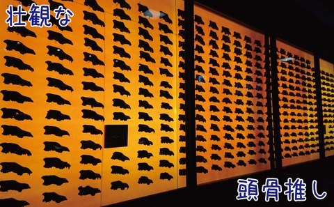 ダイアウルフの頭骨の展示