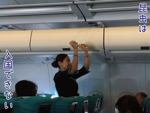 機内で殺虫スプレーを散布