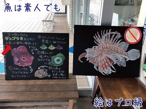 黒板に描かれた魚の絵