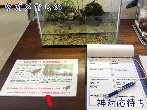 タガメ先生の恋愛相談コーナー(水槽と相談用紙)