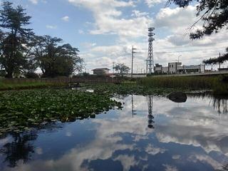 長峰公園の池(撮影日は9月10日)