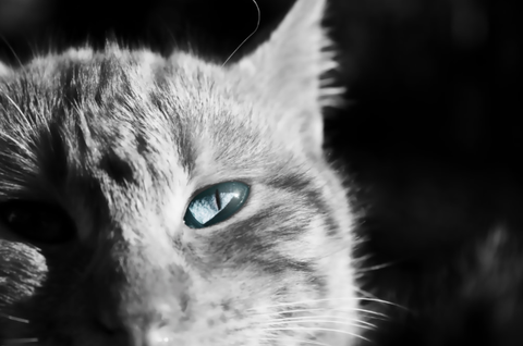 このネコ邪魔すぎワロタwwwwwwwwwの画像