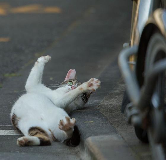 japanese_stray_cat_28
