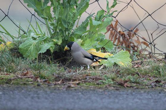 bird_japan_24