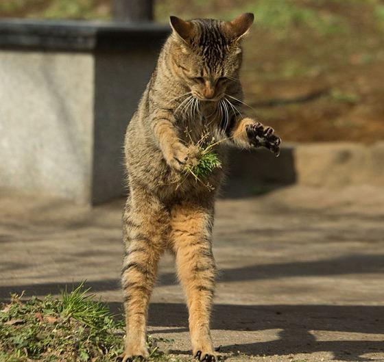 japanese_stray_cat_15