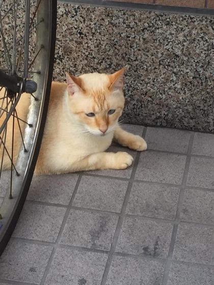 japanese_stray_cat_51