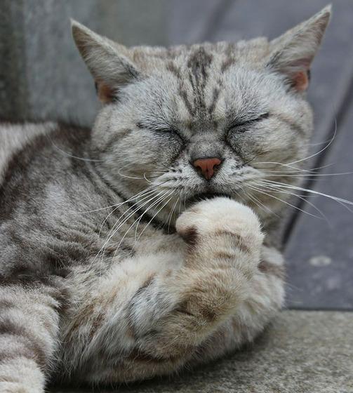japanese_stray_cat_12