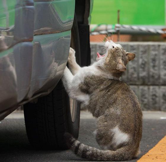 japanese_stray_cat_40