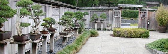 bonsai_style_10