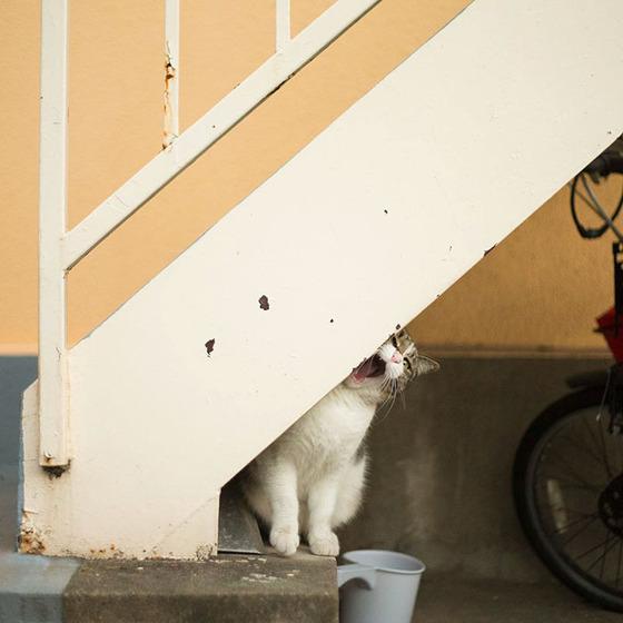 japanese_stray_cat_27