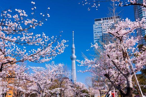 japan_travel_0