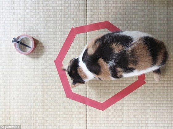 cat_circle3