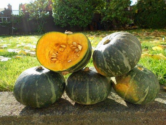pumpkin_0