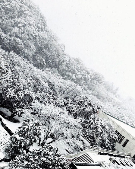 tokyo_snow_22