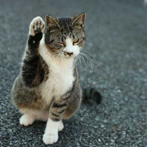 japanese_stray_cat_21