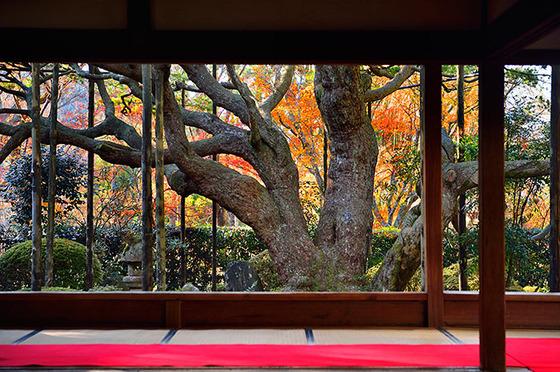 japan_autumnwindow_4