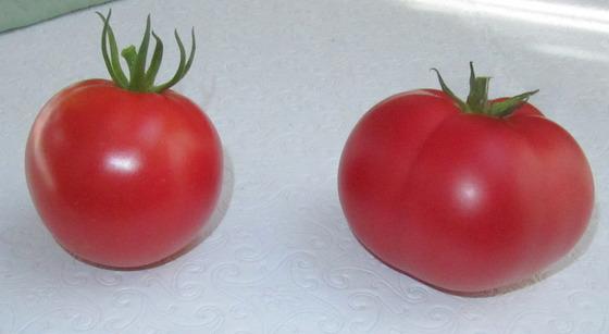 tomato_4