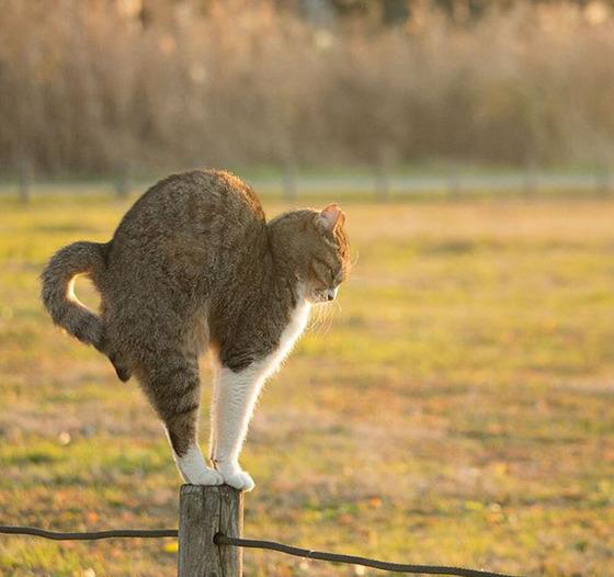 japanese_stray_cat_2