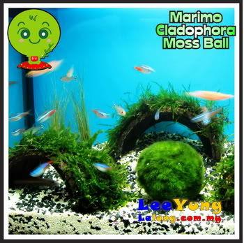 marimo3