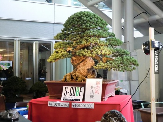 100million_bonsai
