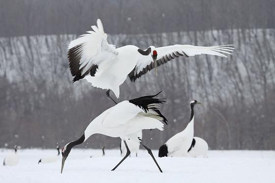 bird_japan_3