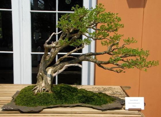 bonsai_style_9