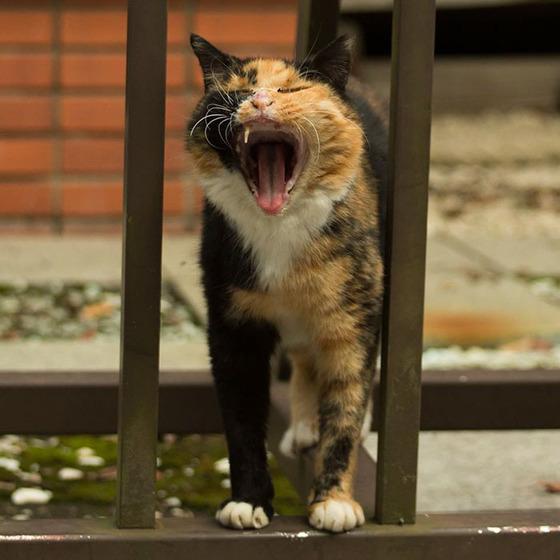 japanese_stray_cat_41