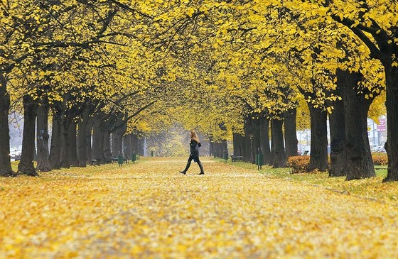 autumn_place_8