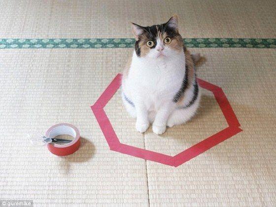 cat_circle1