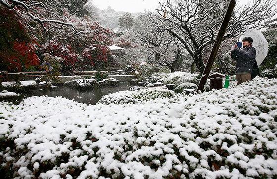 tokyo_snow_21