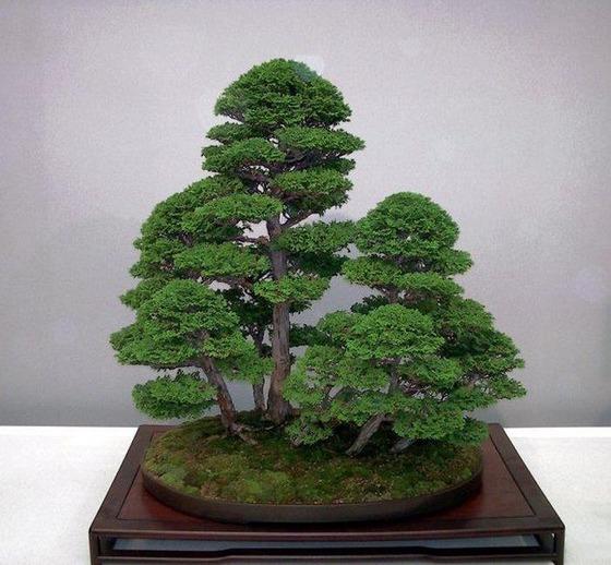 bonsai_style_2