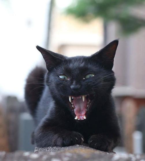 japanese_stray_cat_33
