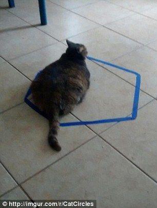 cat_circle7